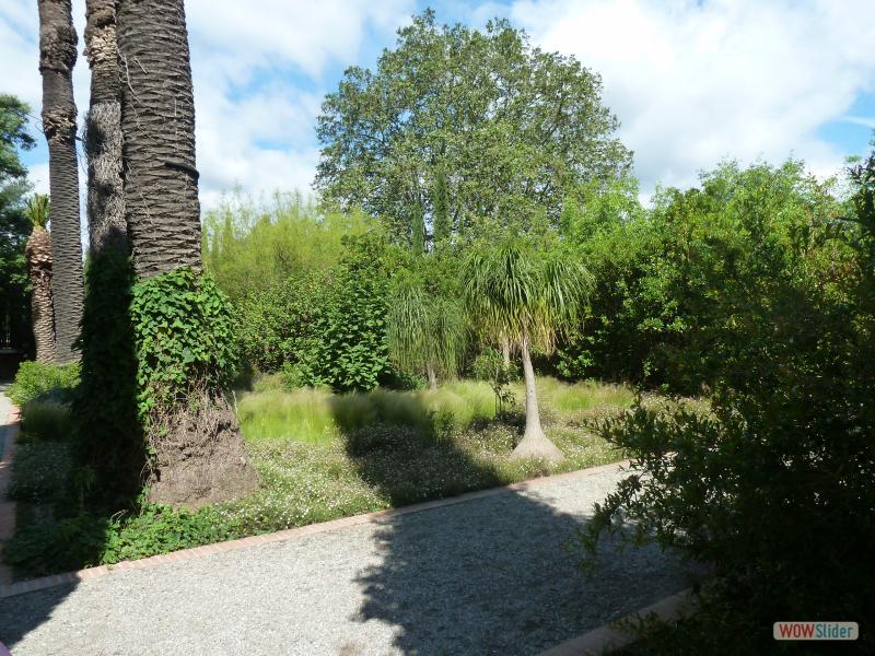 F.Pohl  Paulilles03- un Ceiba speciosa  ou arbre bouteille